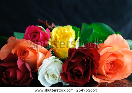 Multicolored Roses Close Up - stock photo