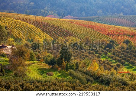 Multicolored vineyards on the hills in autumn in Piedmont, Northern Italy. - stock photo