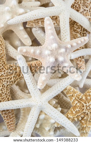 Multiple kinds of starfish grouped together in a pile - stock photo