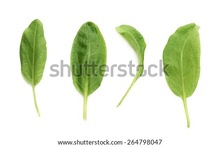 Multiple single green polygonaceae sorrel spinach dock herb leaves isolated over the white background - stock photo