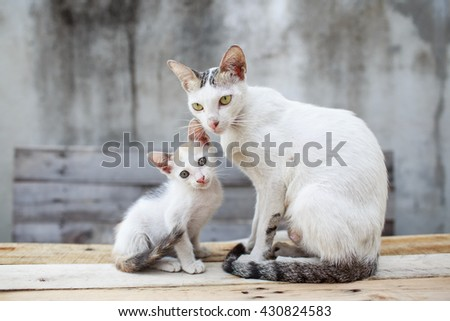 Mum cat and kitten.  Kitty wants to play with the cat mom - stock photo