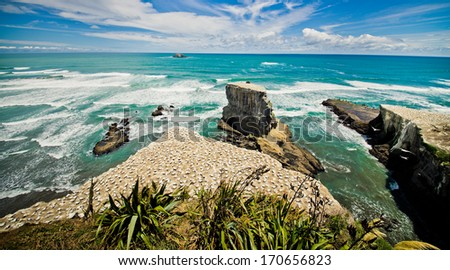Muriwai Beach on the West Coast of the North Island, Auckland, New Zealand  - stock photo