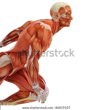 muscle man run close up - stock photo
