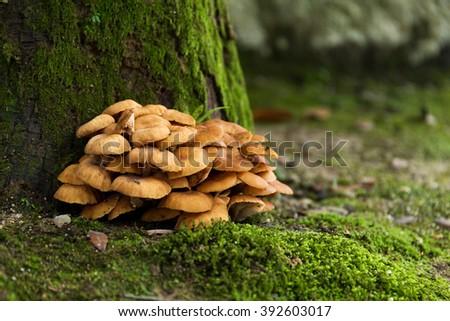 Mushroom and moss - stock photo