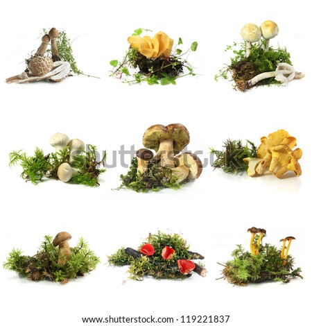 Mushroom collection - from top left: young parasol, Hare's Ear, champignon, puffball, Boletus, Chanterelle, Bay Bolete, Scarlet Cup, Yellowfoot - stock photo