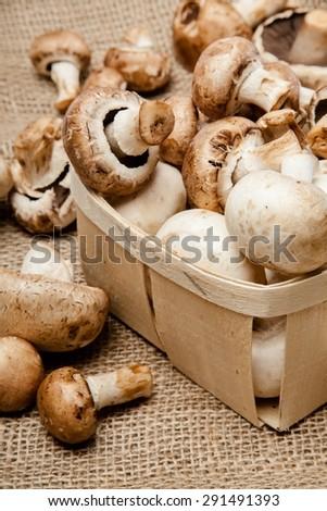 Mushroom, Edible Mushroom, Fungus. - stock photo