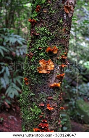 mushroom is growing on the bark tree  - stock photo