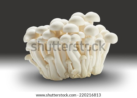 Mushroom isolated on gradi white background with clipped path - stock photo