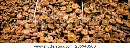 mushroom life - stock photo