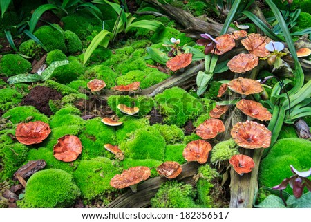 Mushroom On Log And Moss In The Forest - stock photo