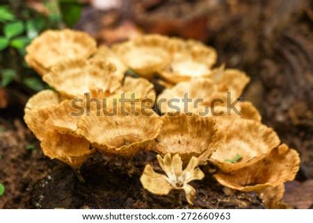 Mushroom or Fungus blurry background - stock photo