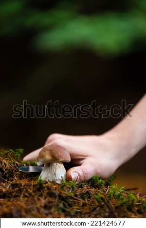 Mushroom picking - detail of the hand with knife - stock photo