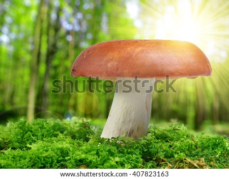 Mushroom Russula in green moss. - stock photo