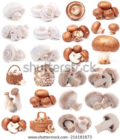 Mushrooms collection - stock photo