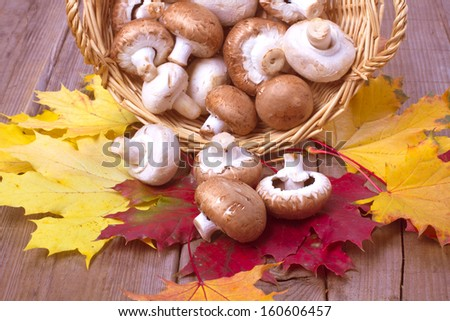 Mushrooms in a basket on a table with autumn leaves - stock photo