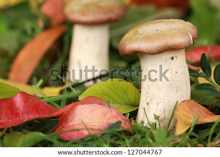 Mushrooms in a forest in autumn, shallow depth of field - stock photo