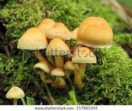 mushrooms in moss - stock photo