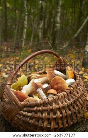 mushrooms in the basket - stock photo