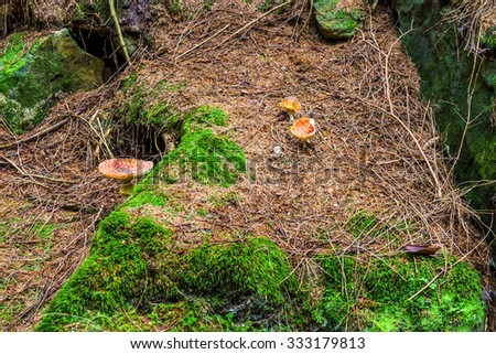 Mushrooms in the woods with autumn colours - stock photo