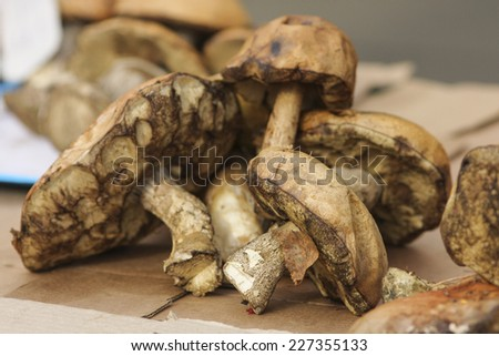 mushrooms on market stand - stock photo