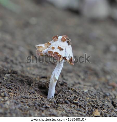 mushrooms on the ground - stock photo