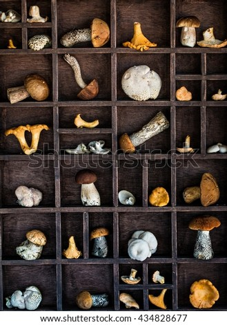 Mushrooms on the wooden wall  shelf  - stock photo