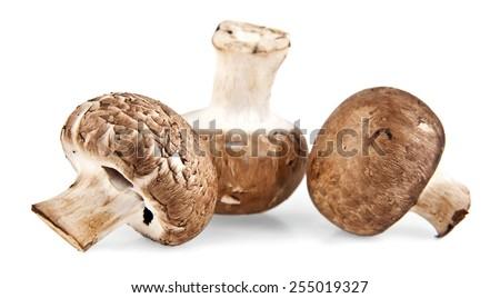 mushrooms on white background - stock photo