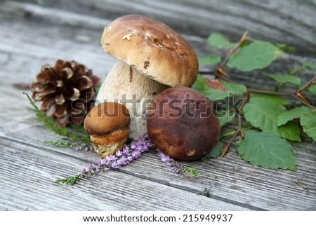 Mushrooms over Wooden Background. Autumn Cep Mushrooms - stock photo