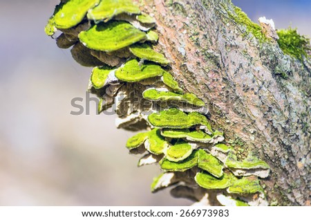 Mushrooms tree bark wood texture moss lichen green forest spring - stock photo