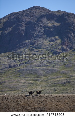 Musk oxen on ridge in arctic valley, Greenland - stock photo
