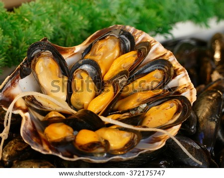 Mussel is the common name used for members of several families of clams or bivalve molluscs, from saltwater and freshwater habitats. - stock photo