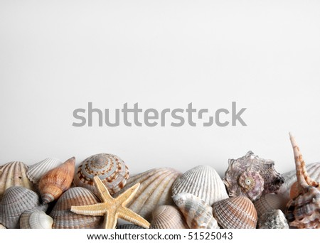 mussels and starfish - stock photo