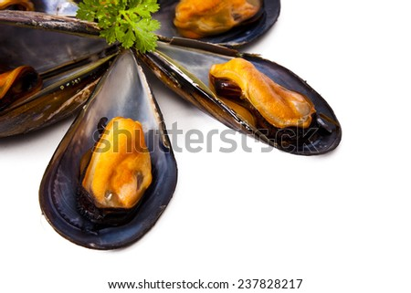 mussels isolated on white background - stock photo
