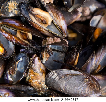 mussles. - stock photo