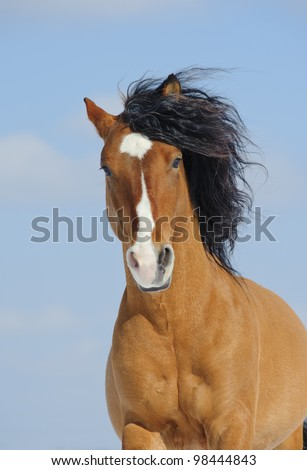 mustang horse - stock photo