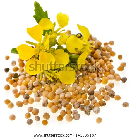 Mustard seeds with mustard flower close up macro  isolated on white background - stock photo