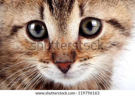 Muzzle of a striped small kitten - stock photo