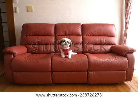 My dog on the sofa, she is very happy/The dog in sofa. - stock photo