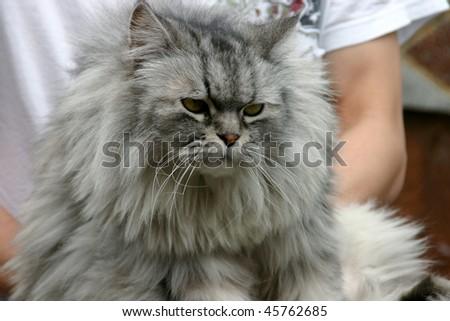 My Lovable Hairy Pet - stock photo