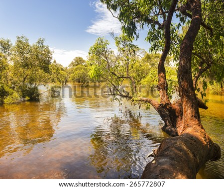 Myora Springs, important Aboriginal site of unique wetlands on Stradbroke Island, Queensland, Australia - stock photo