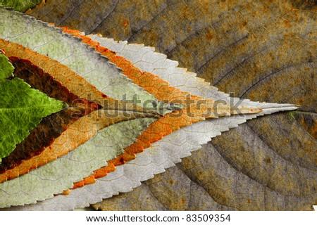 Mysterious autumn foliage - stock photo