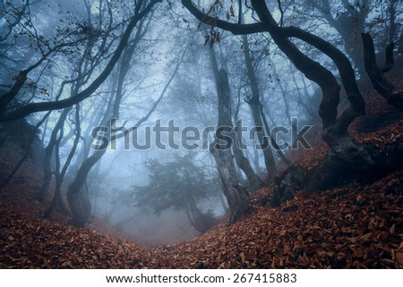 Mysterious dark autumn forest in blue fog with orange leaves, trees and branches . Autumn morning in Crimea (Mountain Ai-Petry) - stock photo