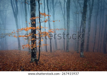 Mysterious dark autumn forest in blue fog with orange leaves, trees and branches. Autumn morning in Crimea (Mountain Ai-Petry) - stock photo
