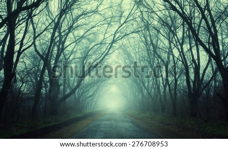 Mysterious dark autumn forest in green fog with road, trees and branches . Morning in Crimea - stock photo
