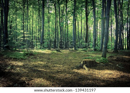 Mysterious dark forest near Rzeszow, Poland - stock photo