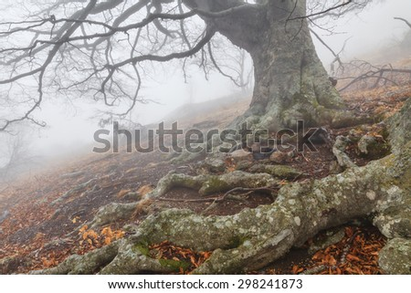 Mysterious foggy autumn forest on the mountain slope. - stock photo