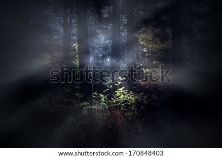 Mysterious foggy dense woods at dawn - stock photo