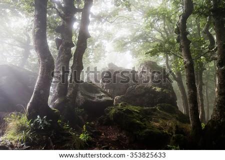 Mysterious foggy forest in Italian mountain, Amiata  - stock photo