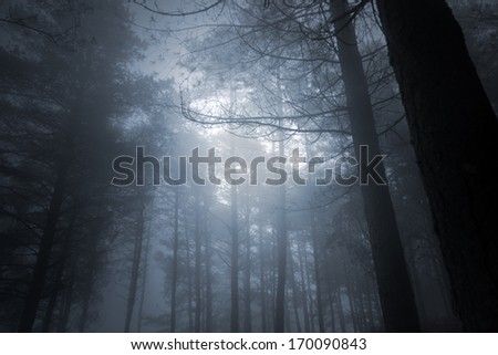 Mysterious foggy full moon forest - stock photo