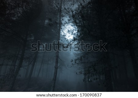Mysterious foggy full moon pinewood - stock photo